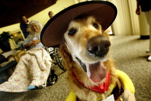 動物・ペット「Hospital Therapy Dogs Dress Up for Halloween」:写真・画像(7)[壁紙.com]