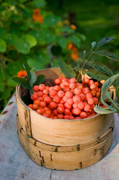 Rowanberries in basket:スマホ壁紙(壁紙.com)