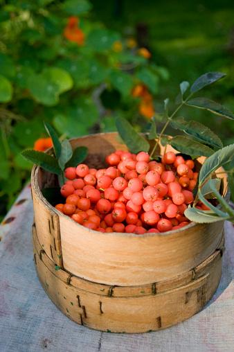 Rowanberry「Rowanberries in basket」:スマホ壁紙(13)