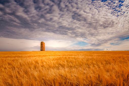 East Lothian「United Kingdom, Scotland, East Lothian, field of barley, Hordeum vulgare, with dovecote」:スマホ壁紙(9)