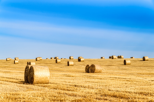 East Lothian「United Kingdom, Scotland, East Lothian, field and hay bales in the evening light」:スマホ壁紙(6)