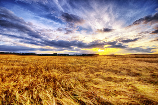 East Lothian「United Kingdom, Scotland, East Lothian, North Berwick, Barley field at sunset」:スマホ壁紙(17)