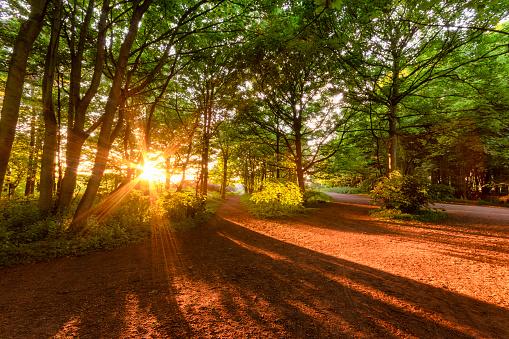 East Lothian「United Kingdom, Scotland, East Lothian, Yellowcraigs, sun beams through trees at sunset」:スマホ壁紙(6)