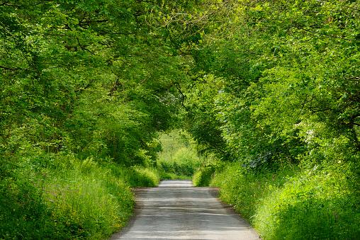 Avenue「United Kingdom, England, Cornwall, Rural road through green tunnel in forest」:スマホ壁紙(11)