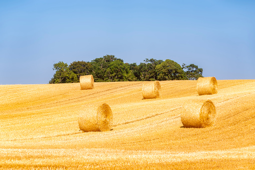 East Lothian「United KIngdom, East Lothian, field with straw bales」:スマホ壁紙(16)