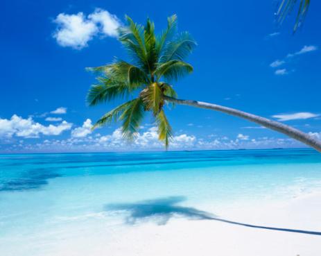 Maldives「Palm on Tropical Beach」:スマホ壁紙(6)