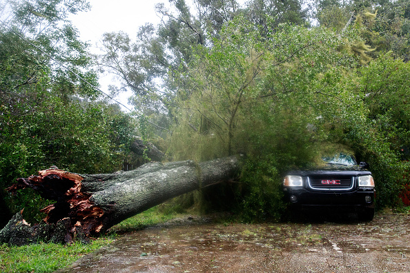 Tree「Hurricane Matthew Bears Down On Atlantic Coast」:写真・画像(9)[壁紙.com]