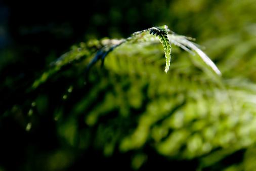 Frond「Fern Frond Close-up」:スマホ壁紙(16)