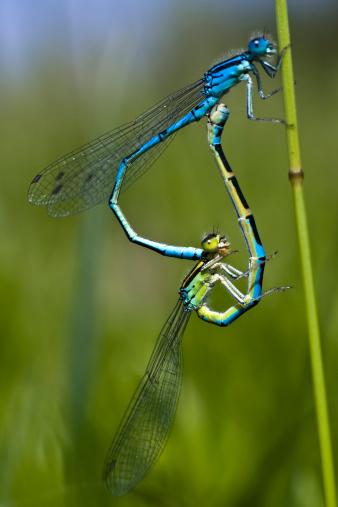 とんぼ「dragonflys」:スマホ壁紙(19)