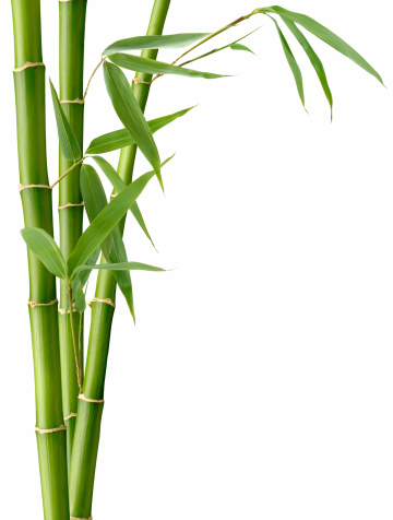 Environmental Conservation「Bamboo and Leaves」:スマホ壁紙(10)