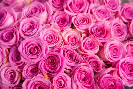 豊富「Roses for sale in a florist」:スマホ壁紙(8)