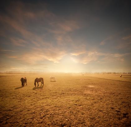 バイタリティ「ホース放牧場の」:スマホ壁紙(14)