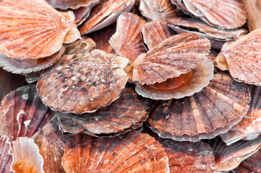 Mollusk「A bunch of scallops for sale at a street market」:スマホ壁紙(17)