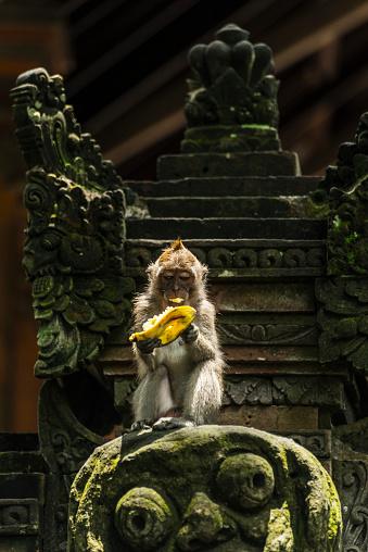バリ島「A monkey eating a banana while sitting on a sculpture, Monkey Forest」:スマホ壁紙(15)