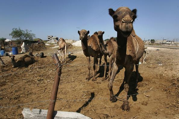 Pasture「Aid Groups Help Palestinians Weather Economic Crisis」:写真・画像(3)[壁紙.com]