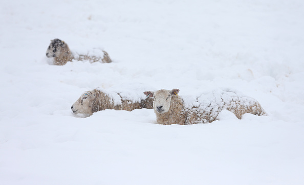 Snow「Storm Jake brings Snow To The North Of England」:写真・画像(5)[壁紙.com]