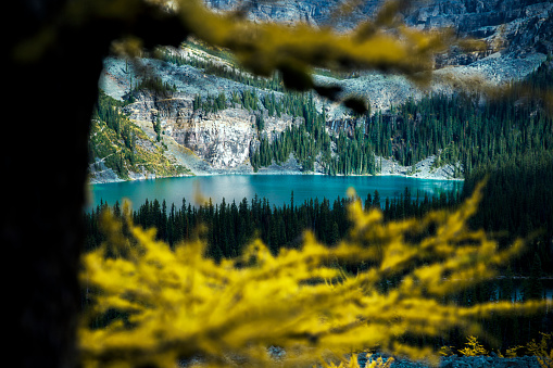 Yoho National Park「Lake O Hara behind larch tree branches, Yoho National Park, Field, British Columbia, Canada」:スマホ壁紙(10)
