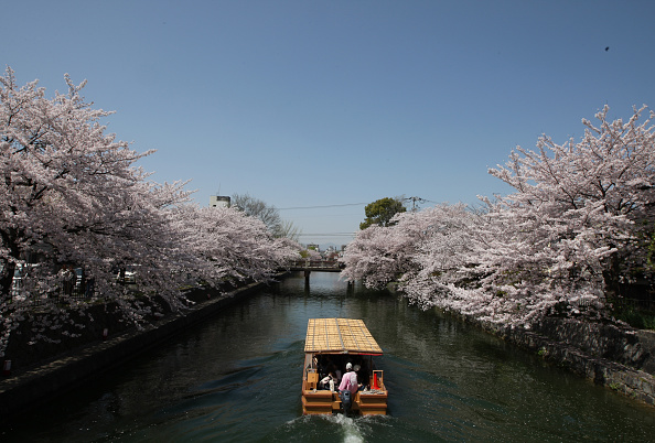 Tourism「Cherry Blossom In Full Bloom In Kyoto」:写真・画像(10)[壁紙.com]