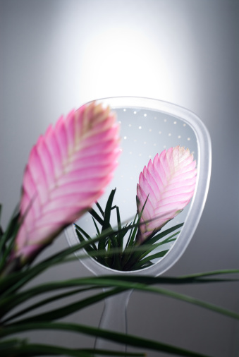 Hand Mirror「Bromelia plant reflected in hand held mirror, close-up」:スマホ壁紙(17)