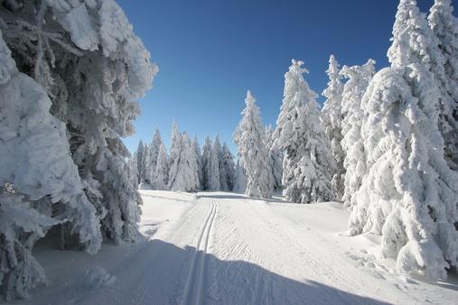 クロスカントリースキー「スキー選手の美しい冬 day.Rogla ,スロベニア」:スマホ壁紙(18)