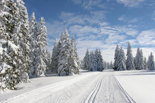 クロスカントリースキー「スキー選手の美しい冬 day.Rogla ,スロベニア」:スマホ壁紙(13)