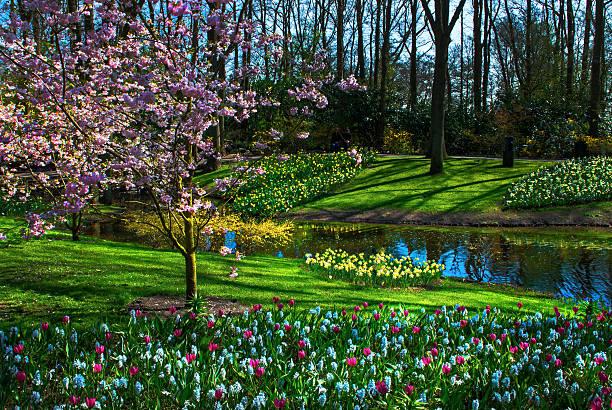 Spring has arrived at Keukenhof  Gardens:スマホ壁紙(壁紙.com)