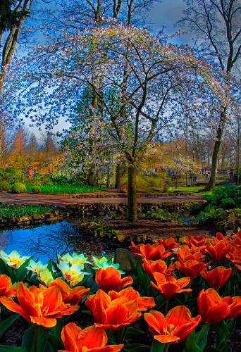 Keukenhof Gardens「Spring has arrived at Keukenhof Gardens」:スマホ壁紙(10)