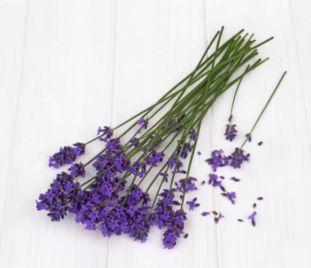 Lavender - Plant「Fragrant stems of lavender flowers on white」:スマホ壁紙(13)