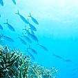 熱帯魚壁紙の画像(壁紙.com)