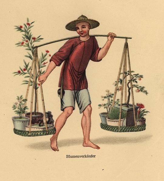 Potted Plant「Flower Seller」:写真・画像(14)[壁紙.com]