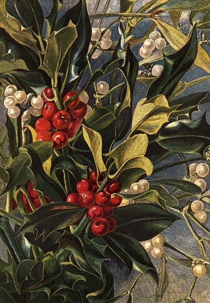 宿り木「Winter Berries」:写真・画像(4)[壁紙.com]