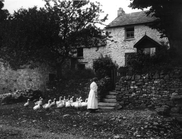 Farm「Poultry Procession」:写真・画像(16)[壁紙.com]