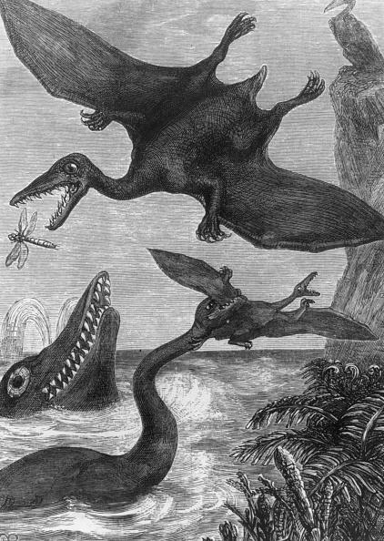 Catching「A Pterodactyl」:写真・画像(8)[壁紙.com]