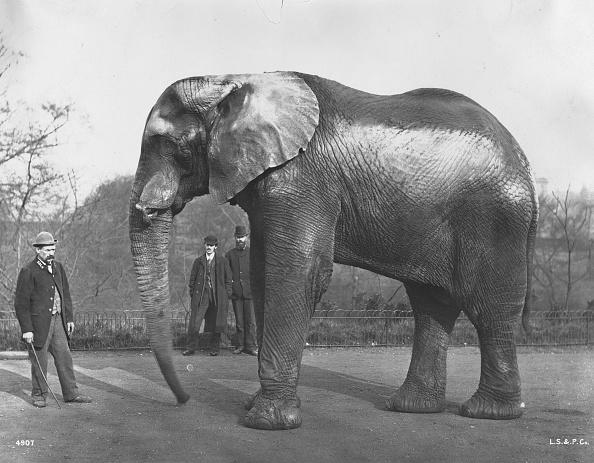 サーカス「Barnum's Elephant」:写真・画像(18)[壁紙.com]
