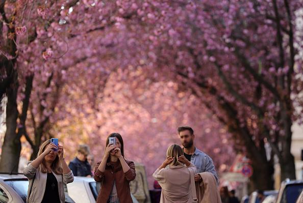 Blossom「The Coronavirus In Germany: Week 4」:写真・画像(13)[壁紙.com]