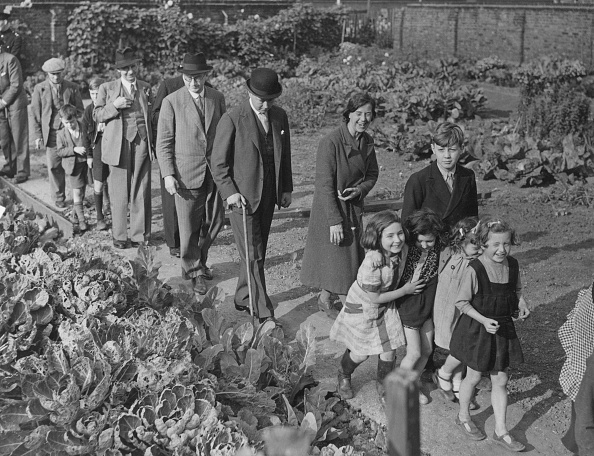 Vegetable Garden「Bethnal Green Allotments」:写真・画像(13)[壁紙.com]