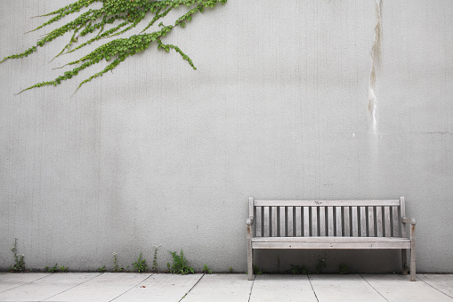 Lush Foliage「White wood bench by white wall with ivy creeping across it」:スマホ壁紙(2)
