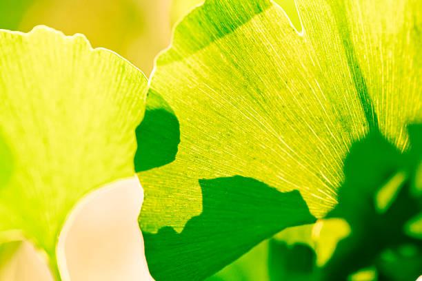shade Leaf in spring:スマホ壁紙(壁紙.com)