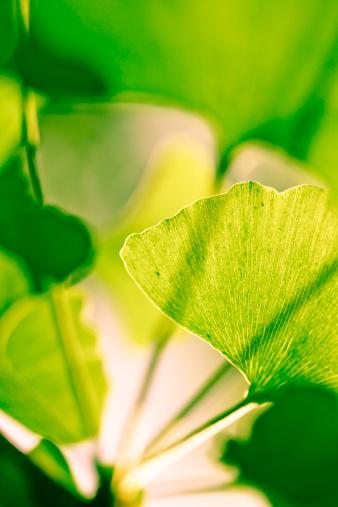 Frond「shade Leaf in spring」:スマホ壁紙(10)
