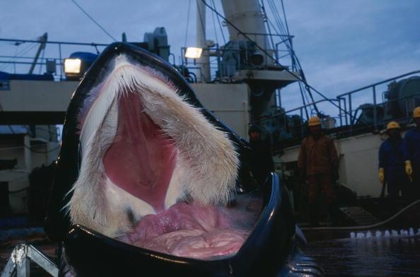 Whale「Whale Mouth」:写真・画像(3)[壁紙.com]
