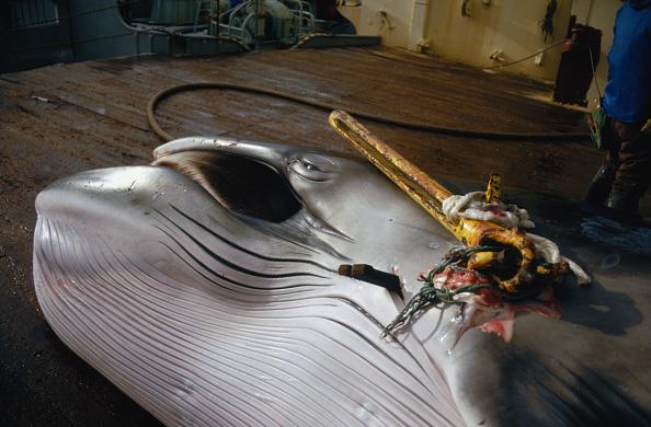 Japan「Japanese Whaling」:写真・画像(14)[壁紙.com]
