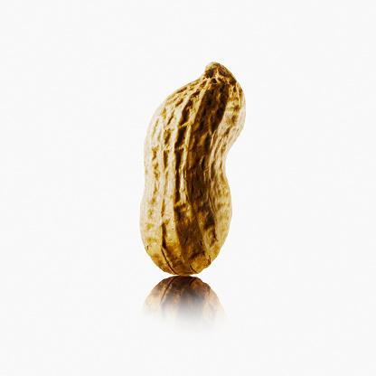 Allergy「Peanut」:スマホ壁紙(19)