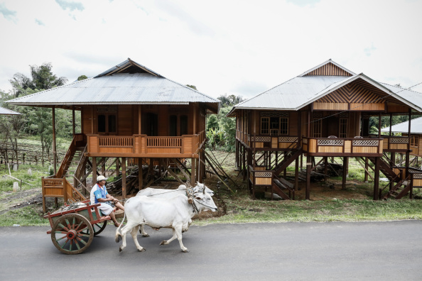 動物「Woloan Village Makes Roaring Trade From Prefabricated Woloan Houses」:写真・画像(12)[壁紙.com]