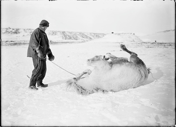 One Animal「Terra Nova Expedition」:写真・画像(10)[壁紙.com]