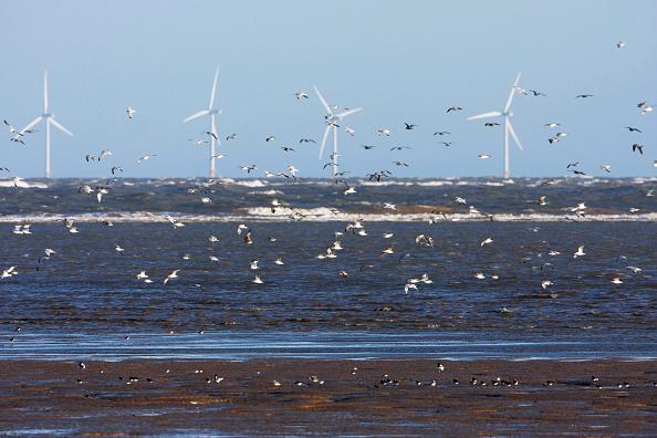 Agricultural Building「Wading birds, offshore wind turbines, Talacre Flint, RSPB nature Reserve, Dee Estuary, Wales UK」:写真・画像(16)[壁紙.com]