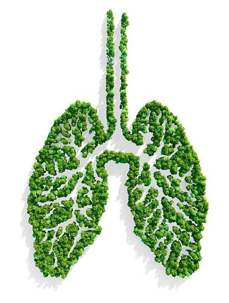 Lungs of the Planet:スマホ壁紙(壁紙.com)