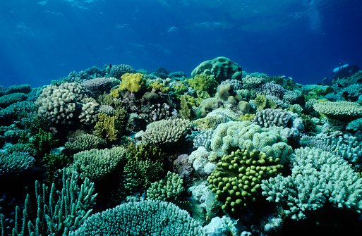 Ecosystem「An underwater picture of a coral garden」:スマホ壁紙(0)