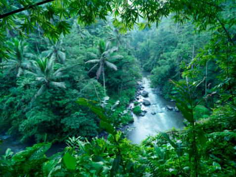 Tropical Rainforest「Indonesia, Bali, waterfall in jungle」:スマホ壁紙(19)