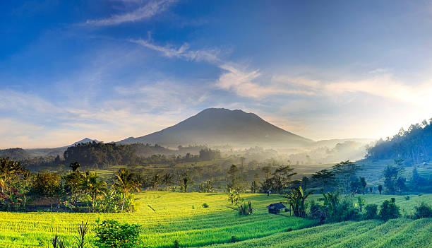 Indonesia, Bali, rice fields and Agung Volcano:スマホ壁紙(壁紙.com)