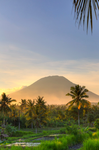 Mt Agung「Indonesia, Bali, Rice Fields and Volcanoes」:スマホ壁紙(19)